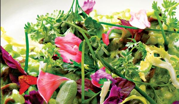 Lotus eaters indulge lotus eaters mightylinksfo