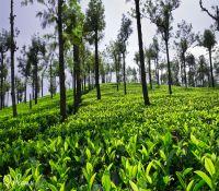 Tirunelveli - Manjolai Hills1